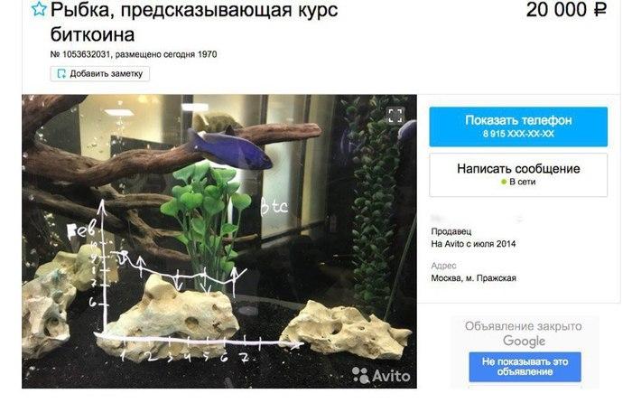 рыбка предсказывает курс биткоина
