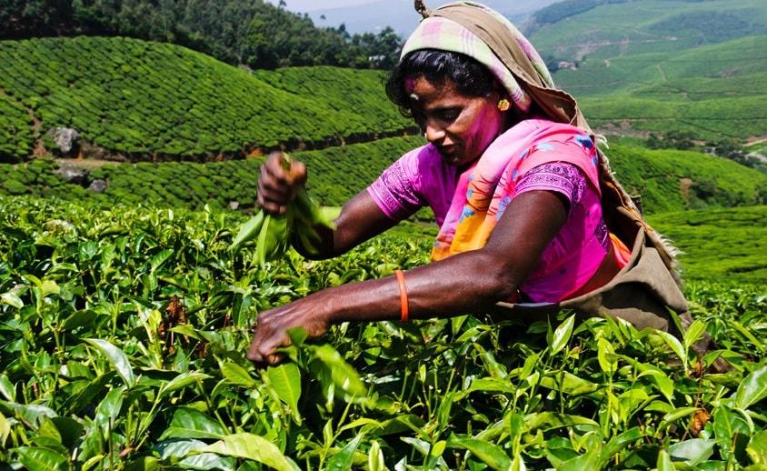 Индийских крестьян научат майнингу
