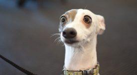 В США преступники вымогали выкуп в биткоинах за собаку