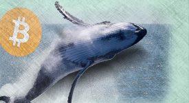 Как «киты» обманывают рядовых криптоинвесторов?