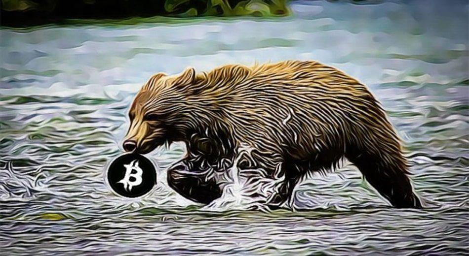 медведи на крипторынке рост биткоина