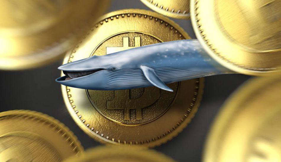 «Киты» позитивно влияют на BTC и стабилизируют крипторынок