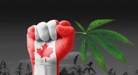 В Канаде запускают глобальный блокчейн для индустрии каннабиса