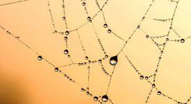 Ученые используют паутину в производстве искусственных мышц