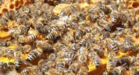 В Европе создали роботов, научивших общему языку пчел и рыб