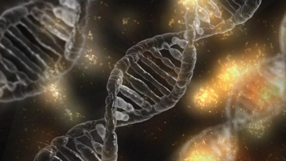 В Новосибирске откроют Центр генетических технологий