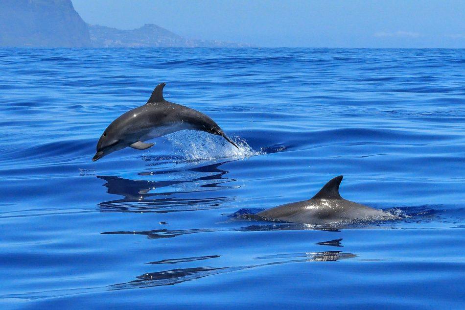 Цианобактерии вырабатывают токсины, сводящие дельфинов с ума