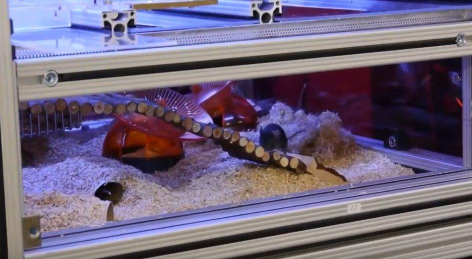 Чтобы облегчить задачу наблюдения за мышами для грызунов построили «умный» дом