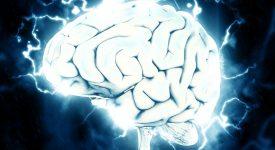 В Британии вырастили мозг, способный устанавливать связь с мышцами грызунов