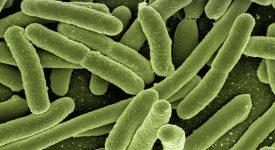 В США нашли новый способ назначения антибиотиков