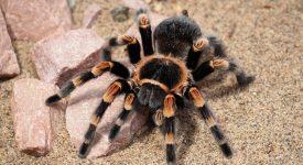 В Великобритании создали соус, имитирующий ощущения от яда паука