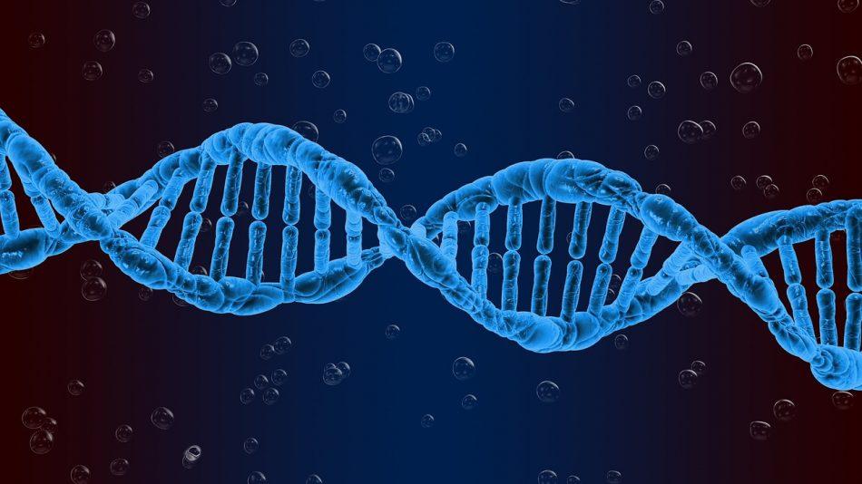 Ученым удалось создать искусственный геном бактерии после удаления из исходного образца большей части кода