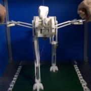 С помощью роботизированной копии древнего предка птиц эксперты выяснили, как развивалась способность летать