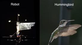 С помощью алгоритма и электродвигателей робот-колибри может определять высоту рельефа