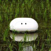 Nissan разработала робота, борющегося с сорняками на рисовых полях