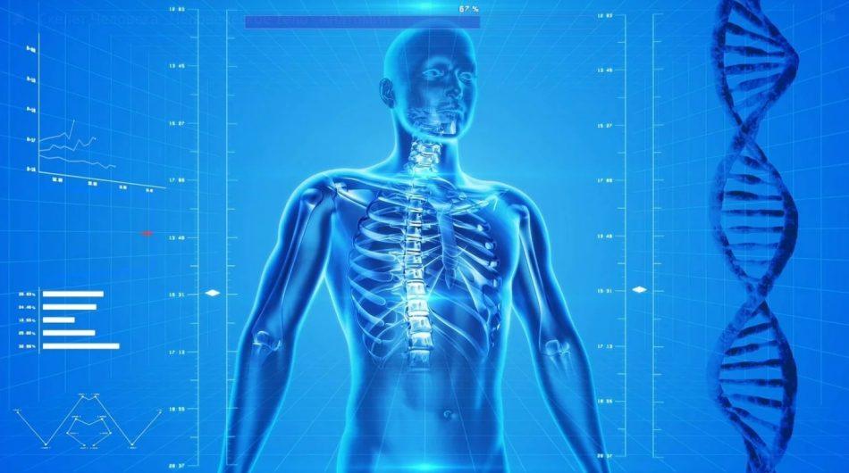 Исследование тела человека