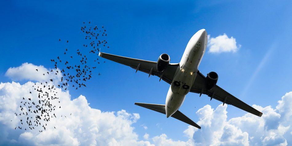 Самолет и птицы